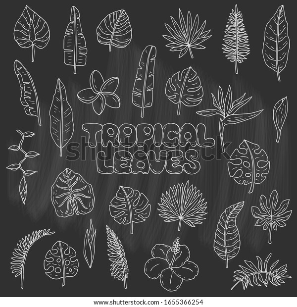 Hand Drawn Doodle Tropical Leaves Flowers Stock Vector Royalty Free 1655366254 The best selection of royalty free tropical leaves doodles vector art, graphics and stock illustrations. shutterstock