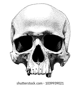 Hand drawn dotted style skull. Vector object isolated on white background
