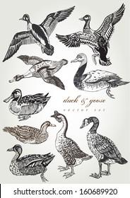 hand drawn duck & goose vector set