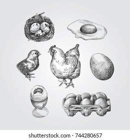 Hand Drawn eggs Sketches Set. Collection Of quail eggs, chicken eggs, Baby chicken and a hen Sketches isolated on white background In Trendy Style