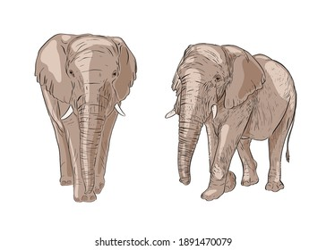 Hand drawn elephant. Colorful vector illustration. African animals background. Sketch. Isolated.