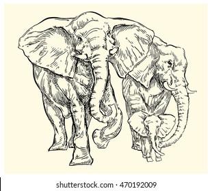 Hand drawn Elephant sketch. Vector lineart illustration.