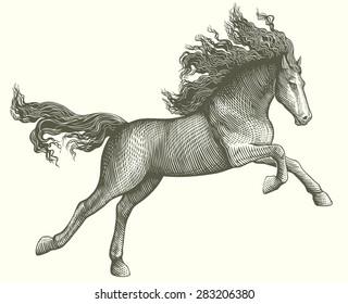Hand drawn engraving. Horse. 8 EPS