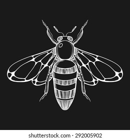 Hand drawn engraving Sketch of  Bee. Vector illustration for tattoo.