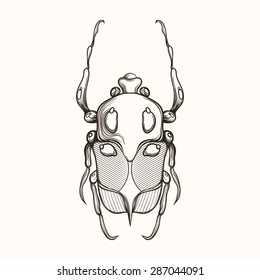Hand drawn engraving Sketch Scarab Beetle, May bug, European diving beetle. Vector illustration for tattoo or handmade brooch. Can be used for postcard, t-shirt, bag or poster. Insect collection.