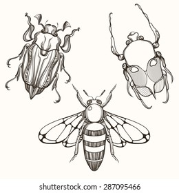 Hand drawn engraving Sketch of Scarab Beetle, May bug and Bee. Design for tattoo and handmade decorative brooch. Can be used for postcard, t-shirt, fabric bag or poster. Insect collection.