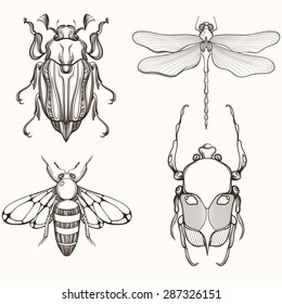 Hand drawn engraving Sketch of Scarab Beetle, Maybug, Bee and Dragonfly. Design for tattoo and handmade decorative brooch. Can be used for for postcard, t-shirt, fabric bag, poster. Insect collection.
