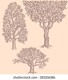 Hand drawn engraving. Trees. 8 EPS