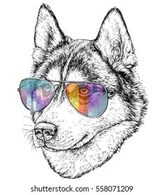 Hand Drawn Fashion Illustration of Husky Hipster with aviator sunglasses. Vector illustration