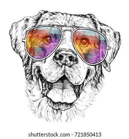 手绘时尚插图牧羊犬与飞行员太阳镜。 矢量插图