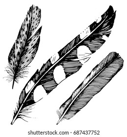 Hand drawn feather bird art isolated on white background. Feather illustration. Feather drawing vector illustration and line art for a black and white tattoo.