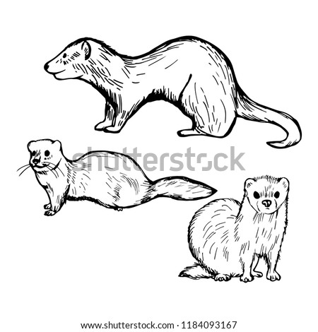 Furry Rodents