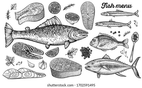 Hand drawn fishes, vector illustration. Salmon, dorado, tuna and anchovies sketches. Caviar and prepared fish steak with spices, lemon, parsley.