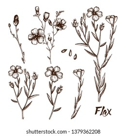 Hand drawn Flax collection.  Agricultural plant drawing with seeds, leaves and flowers. Vegan and healthy food ingredient. Great for packaging, label, icon. Lineart. Vector flax outlines.
