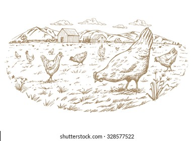 Hand drawn of a flock of free range chickens  at the farm