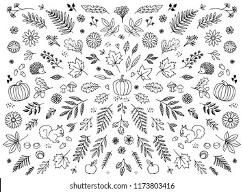 Hand drawn floral elements for autumn / fall - seasonal leaves, flowers and plants for text decoration, black and white illustration