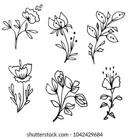 Hand drawn floral elements. Decorative plants and flowers. Graphic vector illustration