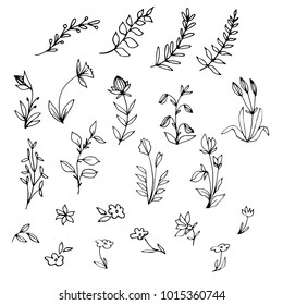 Hand drawn floral elements, herbs, tree branches with leaves, tiny flowers. Black and white vector illustration