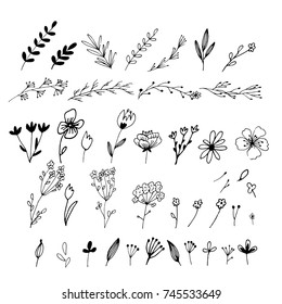 Hand drawn floral & leaves elements made in vector. For wedding design, logo & greeting card.
