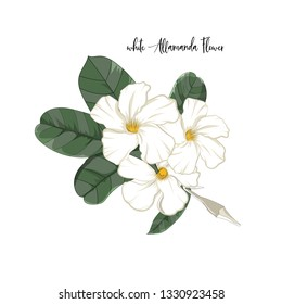 hand drawn flower element,white allamanda with leaf in vector illustration
