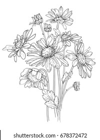 hand drawn flower vector illustration, chamomile with stem and leaves,