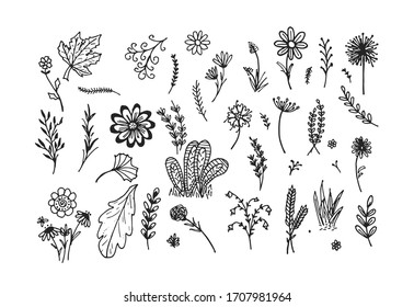 Hand Drawn Flowers Collection  Hand Drawn  Flowers  Flower Illustration  Flower Vector