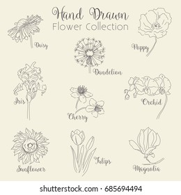 Hand Drawn Flowers Collection - vector illustration set, eps10