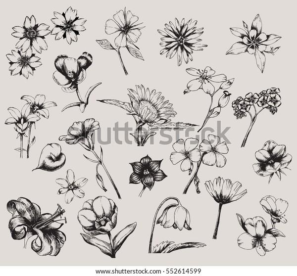 Vector de stock (libre de regalías) sobre Colección Flores ...