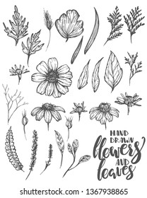 Hand drawn flowers and leaves, floral set, vintage style