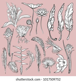 Hand drawn flowers and leaves of tropical plants. Graphic style floral set isolated on pink background. Lotus, Heliconia, frangipani, trumpetbush flowers, Staghorn Fern and palm leaves. EPS10 vector