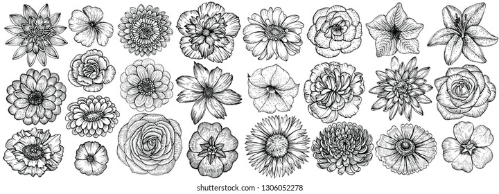 Hand drawn flowers, vector illustration. Big set of different types garden flowers in sketch style.