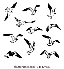 how to draw a cartoon bird flying