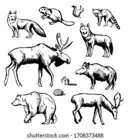 Hand drawn forest animals on white background. Vector sketch illustration.