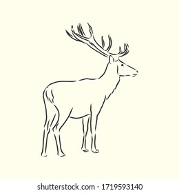 Hand drawn. forest deer, vector sketch illustration