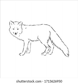 Hand drawn fox, vector illustration. See also other sets of animals. wild Fox vector illustration