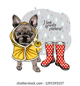 Hand drawn french bulldog with yellow raincoat and gumboots. Vector spring greeting card. Cute colorful dog with daffodil flower. I love spring rain. Lovely pet portrait. Poster, banner, flyer design.