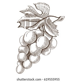 Hand drawn fresh fruit concept with bunch of ripe grapes on white background isolated vector illustration