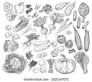 Hand drawn fresh vegetables set. Template for your design works. Engraved style vector illustration.