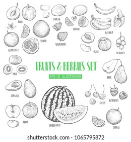 Hand drawn fruits and berries set.  Template for your design works. Engraved style vector illustration.