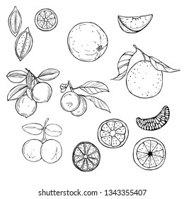 Hand drawn fruits on white background. Orange and lime.  Vector sketch  illustration.