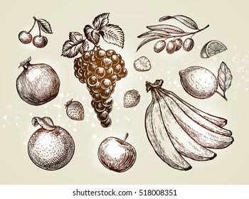 Hand drawn fruits. Sketch vector illustration