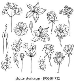 Hand drawn garden flowers. Vector sketch  illustration.