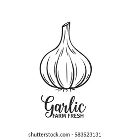 Hand drawn garlic icon. Vector badge vegetable in the old ink style for brochures, banner, restaurant menu and market