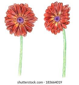 Hand drawn gerber. Colour pencils vector illustration.