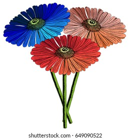 Hand drawn Gerbera flower set in various colors. Separate vector flowers in a bouquet illustration.