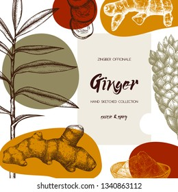Hand drawn Ginger illustration. With roots, ginger pieces and flower. Herbal spice design. Vegan and healthy food ingredient. Abstract trendy elements for banner design, textile or wrapping papper.