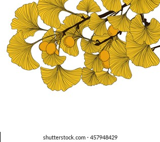 Hand drawn gingko leaves and fruits