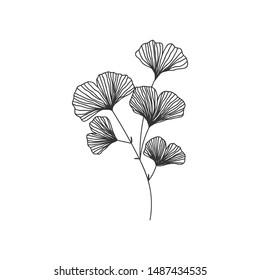 Hand drawn ginkgo biloba branch illustration on white background