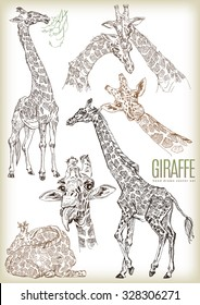 Hand drawn giraffe vector set