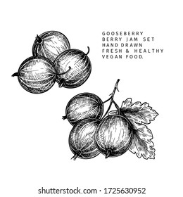 Hand drawn gooseberry branch, leaf and berry. Engraved vector illustration. Dewberry agriculture plant. Summer harvest, jam or marmalade vegan ingredient. Menu, package, cosmetic and food design